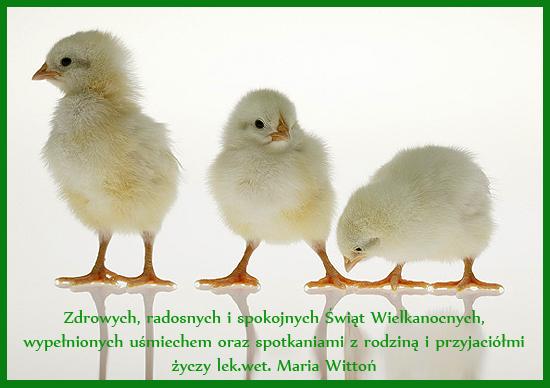 kurczaki 2
